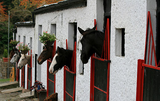 Horses sticking their heads out of red barn doors