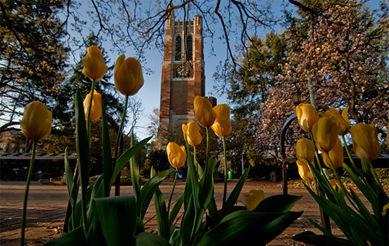 Beaumont Tower with yellow tulips in foreground